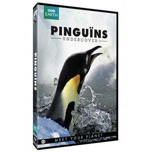 PINGUINS UNDERCOVER   Natuur