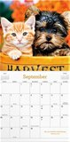 Whiskers & Paws - Wandkalender 2020 Large_14